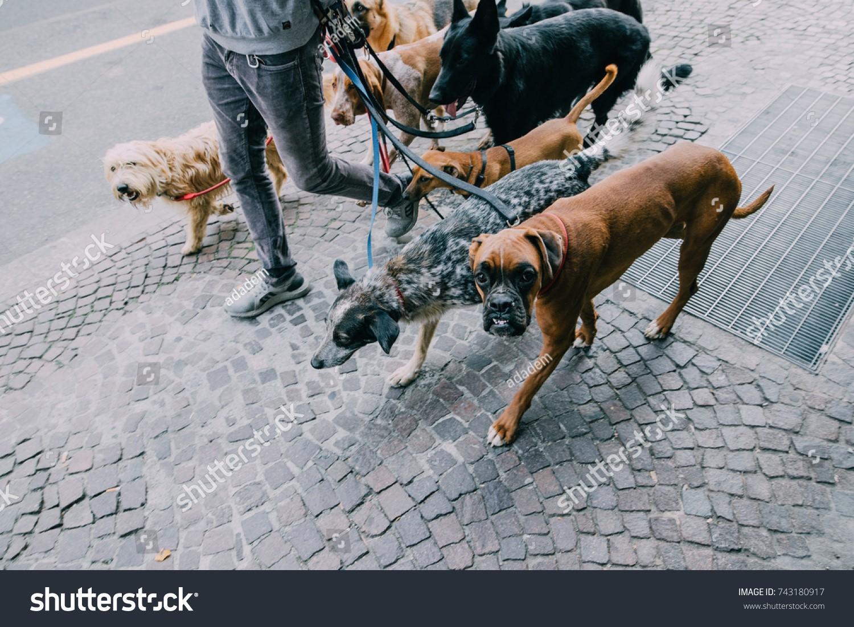 caini pe trotuar