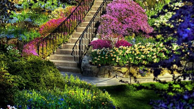 21.04.2019 Grădină cu flori